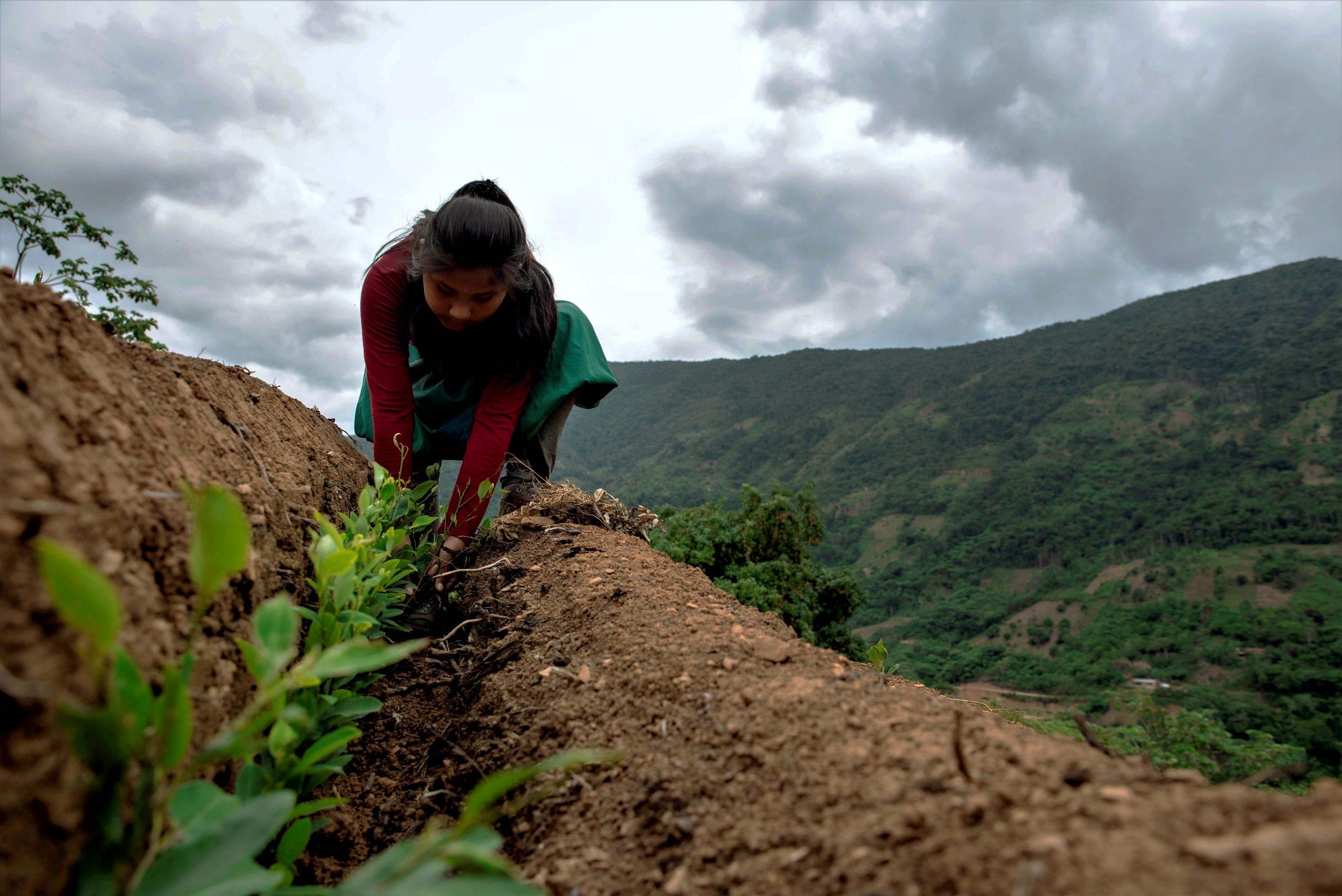 Ensayo fotográfico: Mujeres cultivadoras de hoja de coca, historias de lucha y resiliencia