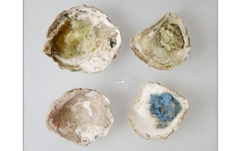 Oyster shell palettes (© Glastonbury Abbey; photograph: David Cousins)