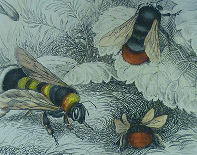 The Cowan Bee collection