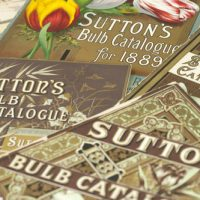 suttons bulb catalogue HCIC photoshoot