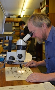 Herbarium collections