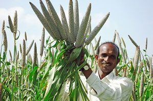 Millet-based diet can lower risk of type 2 diabetes and help manage blood glucose levels