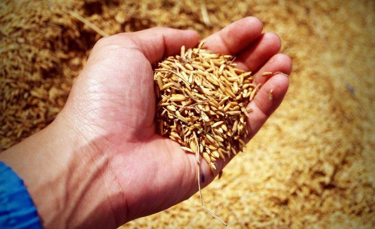 abundance-agricultural-agriculture-226615_1