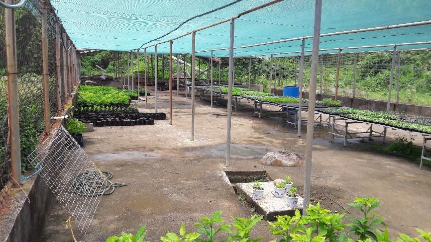 propagation facility Portsmouth Dominican Cocoa Project