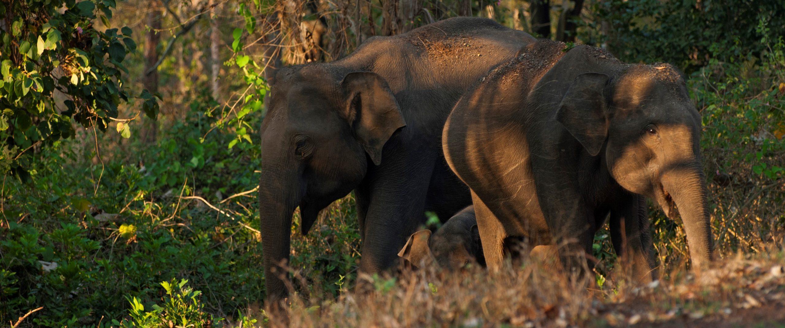 Anyone for fieldwork (with elephants)? By Sandy Harrison
