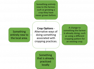 Diagram showing definition of crop options